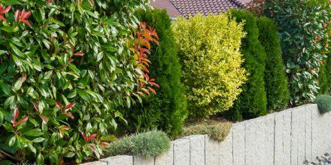 Sichtschutz Zäune Hecken Mauern